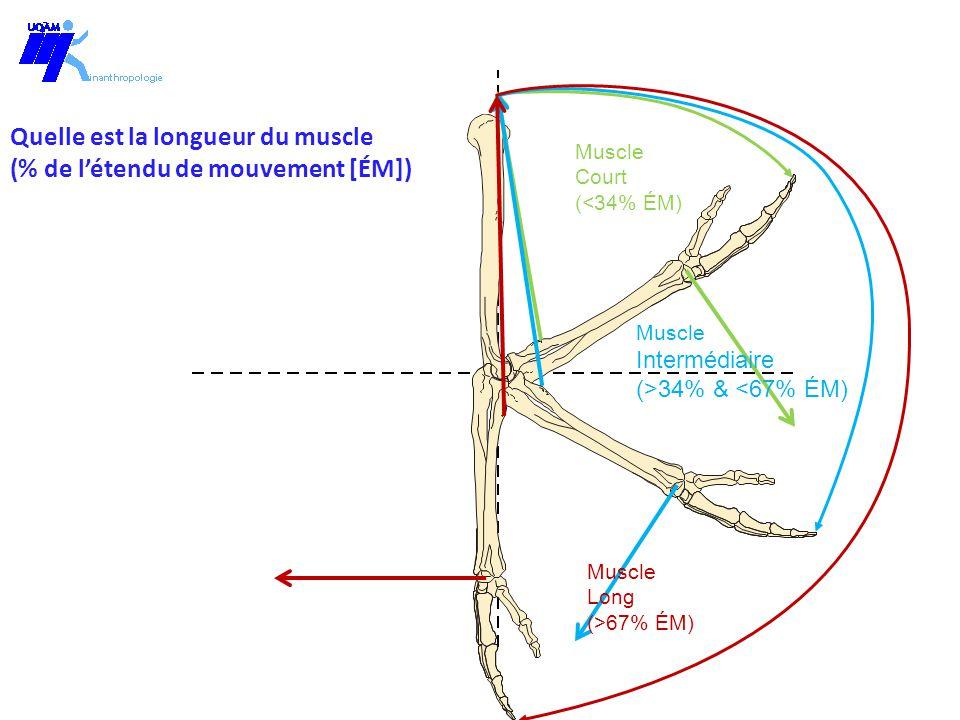 Quelle est la longueur du muscle (% de l'étendu de mouvement [ÉM])